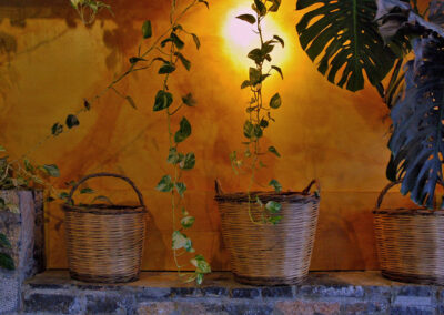 Traditional hand-woven baskets